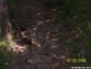 Timber Rattlesnake by BobTheBuilder in Snakes