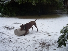 Maggie In The Snow by BobTheBuilder in Members gallery