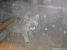 Cat in Hornell, NY