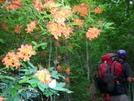 Hiking Thur Flame Azalea by Turtle2 in Flowers