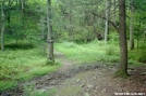 Holly Springs Trail by Buckingham in Trail & Blazes in New Jersey & New York