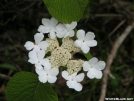 Lacecap Hydrangae by LovelyDay in Flowers
