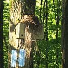 Bird's Nest by LovelyDay in Birds