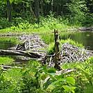 Beaver Lodges by LovelyDay in Views in Massachusetts