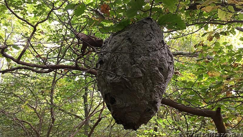 Wasps at Hightop