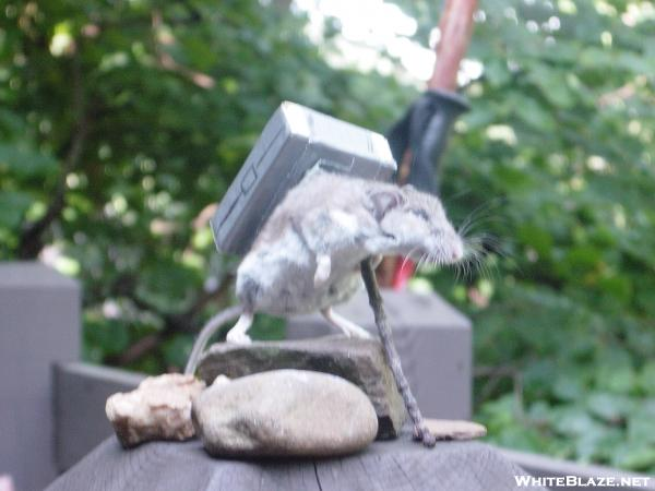 the hiker mouse of Skyland