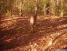 Deer in camp by SGT Rock in Deer