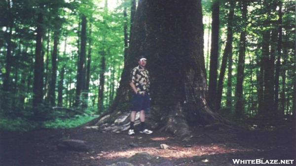 John Waskalisk Memorial Poplar