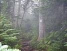 A Foggy Trail In Vermont by Blissful in Trail & Blazes in Vermont