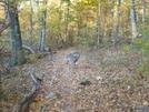 Deer On Patrol by Blissful in Deer