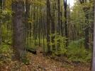 Autumn Trail In Shenandoah