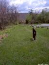 Pinnacles Picnic Area by FlyPaper in Trail & Blazes in Virginia & West Virginia