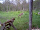 Deer Closeup by FlyPaper in Deer