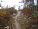 Trail In Snp by FlyPaper in Trail & Blazes in Virginia & West Virginia