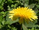 Flower by FlyPaper in Trail & Blazes in Virginia & West Virginia