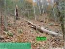 HalfMilefromSlickrock4 by Frolicking Dinosaurs in Benton MacKaye Trail