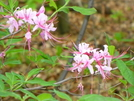 Flowers Along The Trail In Maryland by Undershaft in Flowers