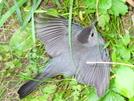 Bird Laying Eggs by Undershaft in Birds