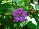 Flower In Ma by Undershaft in Flowers
