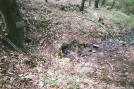 Caper Spring .2 mi south of 10 Mile River Lean-to in CT by refreeman in Trail & Blazes in Connecticut