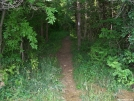 CT: Walking into the woods. by refreeman in Trail & Blazes in Connecticut