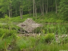 Beaver lodge down the hill behind Pine Swamp Brook Lean-to in CT. by refreeman in Trail & Blazes in Connecticut
