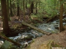 Race Brook Falls Trail, Puncheon Bridge by refreeman in Trail and Blazes in Massachusetts