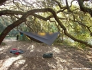 It only takes one tree by Hanger in Hammock camping