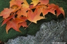 Leaves, Rock, Moss - Lye Brook Wilderness, VT