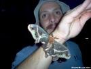 Cecropia Moth by crazylegscrim in Other