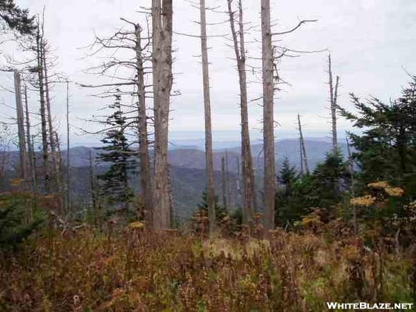 View east of Clingman's Dome
