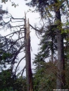Lightning Damage photo 1 by Uncle Wayne in Views in North Carolina & Tennessee