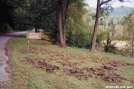 More Wild Hog Damage by Uncle Wayne in Trail & Blazes in North Carolina & Tennessee