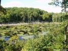 NJ swamp