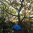 Albert Mountain Campsite