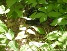 Snake in Georgia by bigmac_in in Snakes