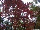Early fall color by Cuffs in Faces of WhiteBlaze members