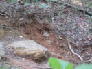 Yellow Jacket nest.9-2-07 by Skidsteer in Other
