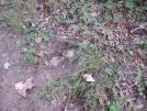 Yellow Jacket nest. 9-3-07