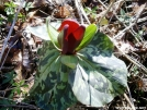 Georgia wildflowers are blooming