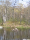 Pine Swamp Pond beaver lodge by Askus3 in Connecticut Shelters