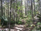 AT north of Bald Mountain Pond