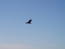 Its A Bird Not A Plane by fonsie in Other
