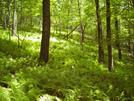 Forest Of Ferns by fancyfeet in Views in Virginia & West Virginia