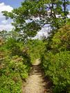 Patterson Field 2 by fancyfeet in Trail & Blazes in Virginia & West Virginia
