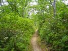 Patterson Field by fancyfeet in Trail & Blazes in Virginia & West Virginia