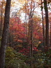 Fall 08 by greentick in Views in North Carolina & Tennessee