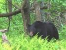 Bear in SNP by Pedaling Fool in Bears