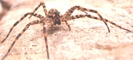 Spider Close-up by Pedaling Fool in Other