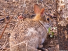 Rabbit near Licklog Gap by Pedaling Fool in Other